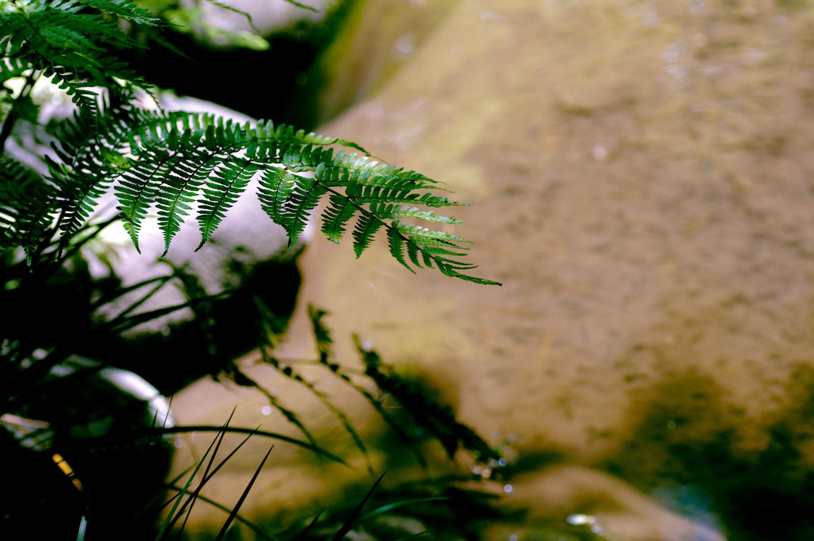 ヒツジが先かシダ植物が先か問題を考える